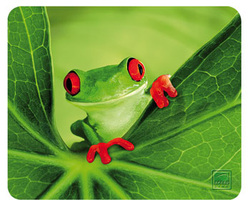 Green Tree Frog Reptile Care
